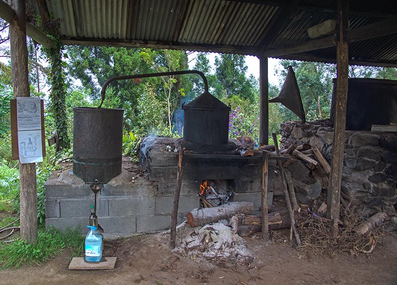 Geranum Destille