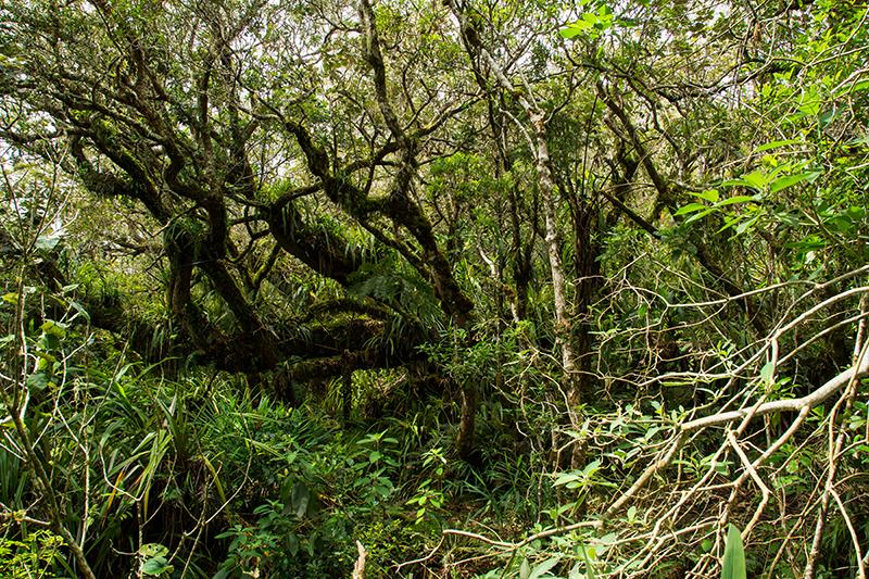Der Regenwald von Belouve